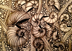 Shells, copyright www.thecrystallotus.com