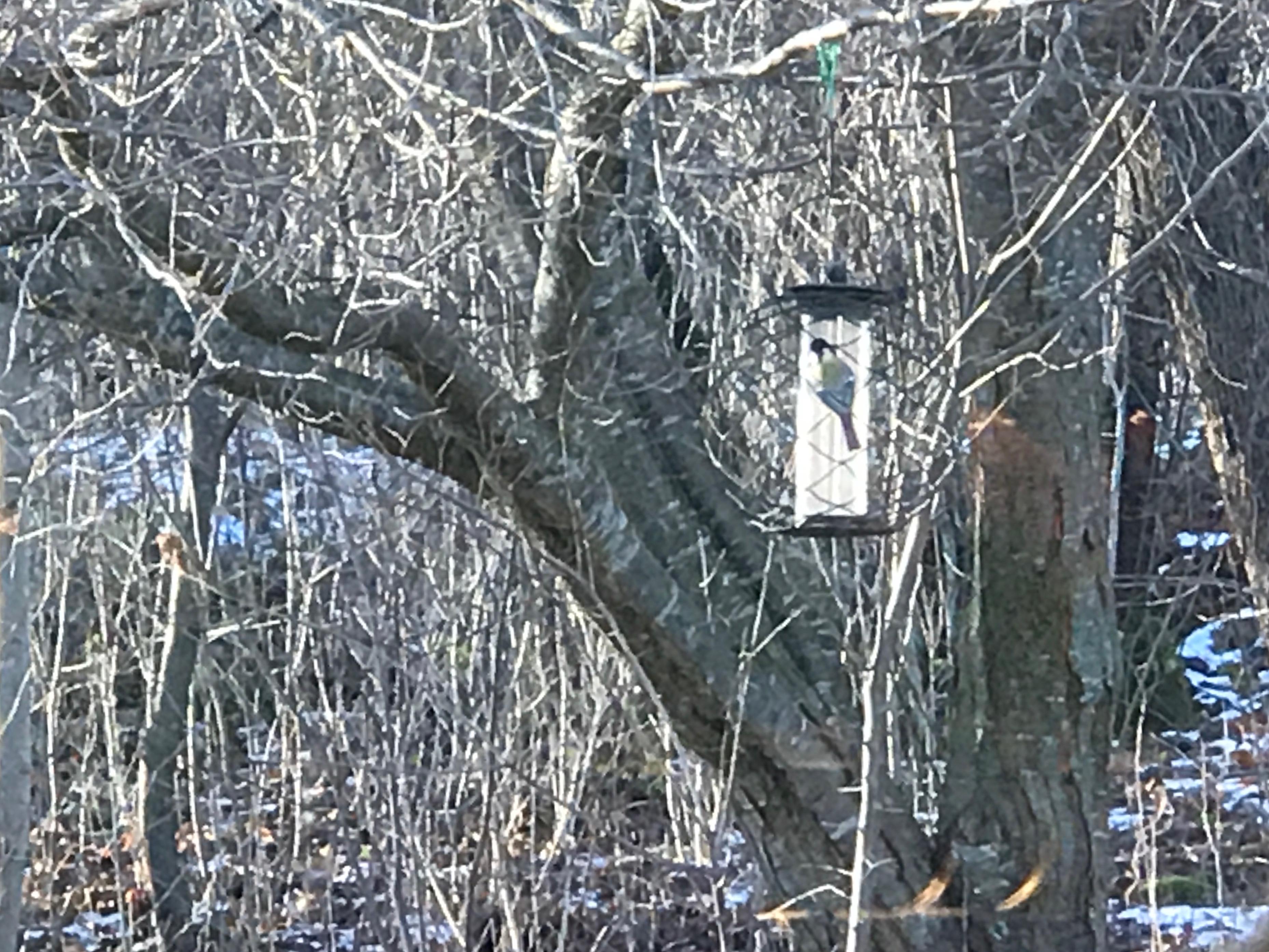 Mirabel tree